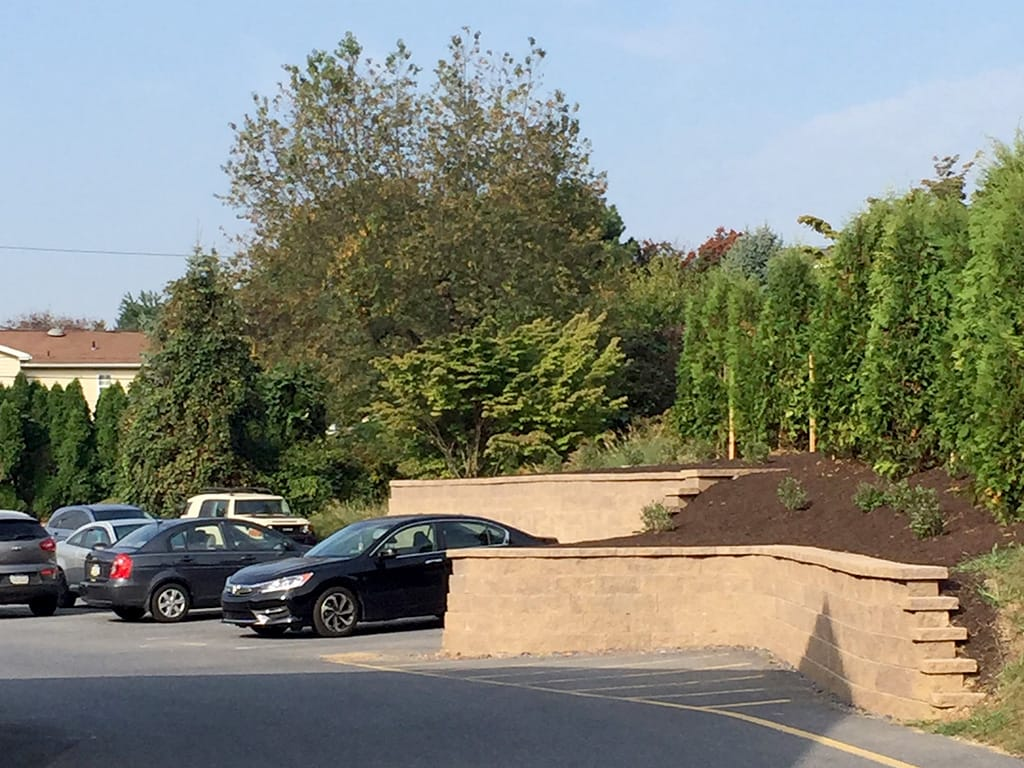 Parking lot retaining wall with arborvitae screening