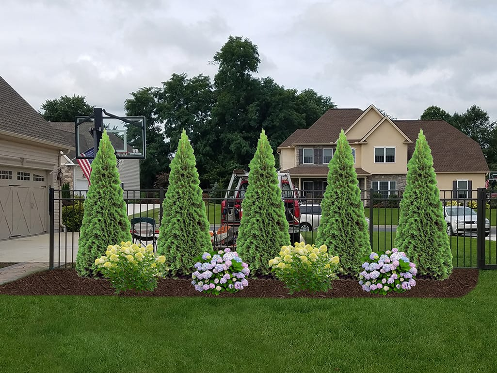 Large Gate Driveway Plantings