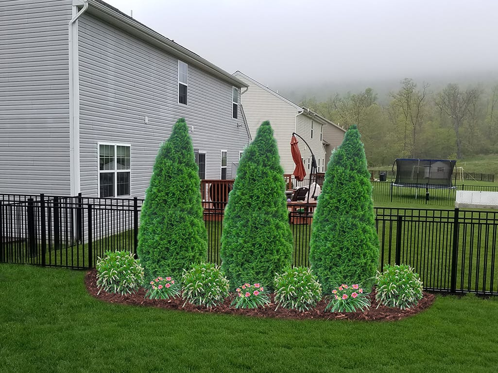 Side Screen Planting